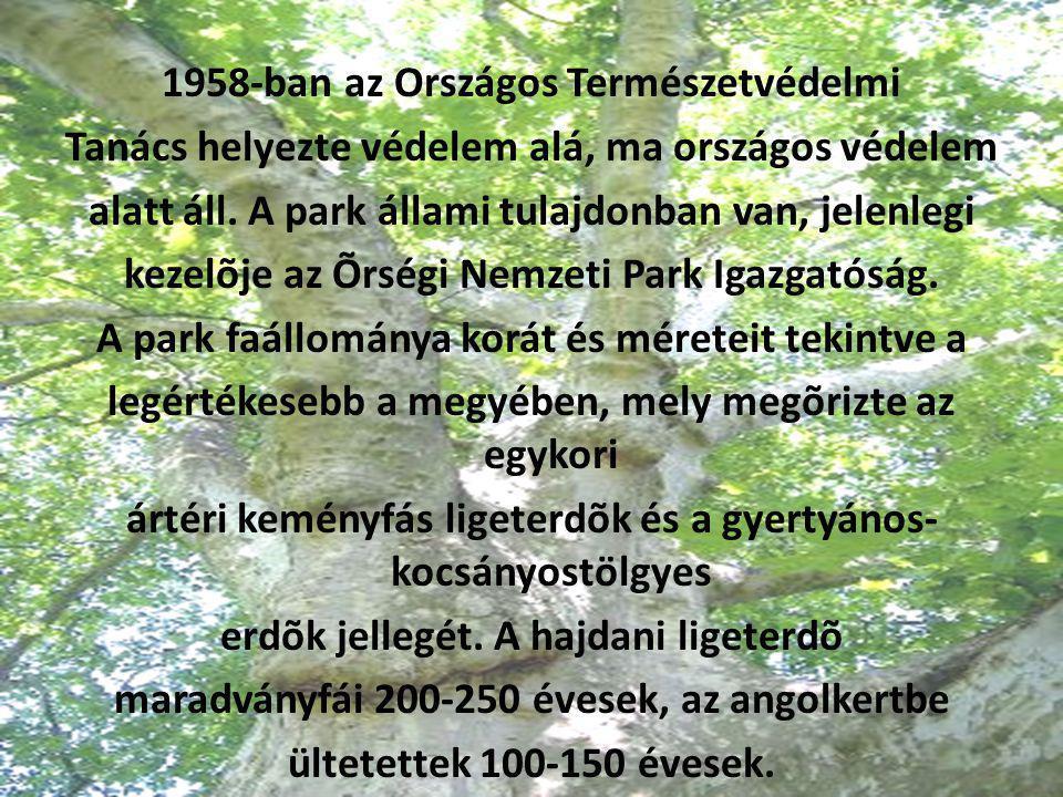 1958-ban az Országos Természetvédelmi Tanács helyezte védelem alá, ma országos védelem alatt áll.