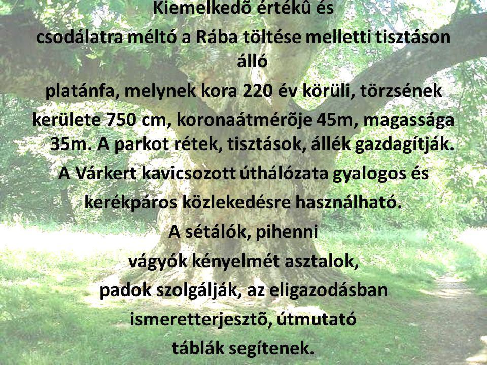 Kiemelkedõ értékû és csodálatra méltó a Rába töltése melletti tisztáson álló platánfa, melynek kora 220 év körüli, törzsének kerülete 750 cm, koronaátmérõje 45m, magassága 35m.