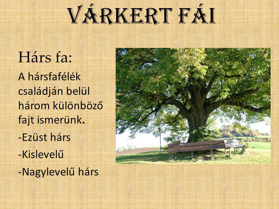 Várkert fái Hárs fa: A hársfafélék családján belül három különböző fajt ismerünk. -Ezüst hárs. -Kislevelű.