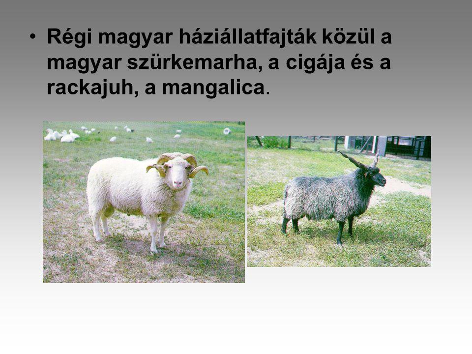 Régi magyar háziállatfajták közül a magyar szürkemarha, a cigája és a rackajuh, a mangalica.