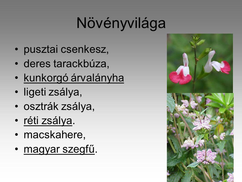 Növényvilága pusztai csenkesz, deres tarackbúza, kunkorgó árvalányha