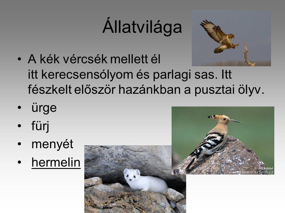 Állatvilága A kék vércsék mellett él itt kerecsensólyom és parlagi sas. Itt fészkelt először hazánkban a pusztai ölyv.