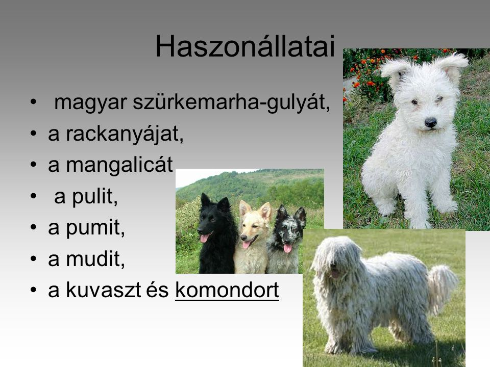 Haszonállatai magyar szürkemarha-gulyát, a rackanyájat, a mangalicát