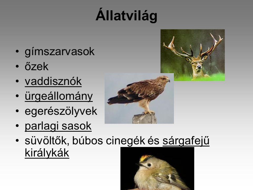 Állatvilág gímszarvasok őzek vaddisznók ürgeállomány egerészölyvek