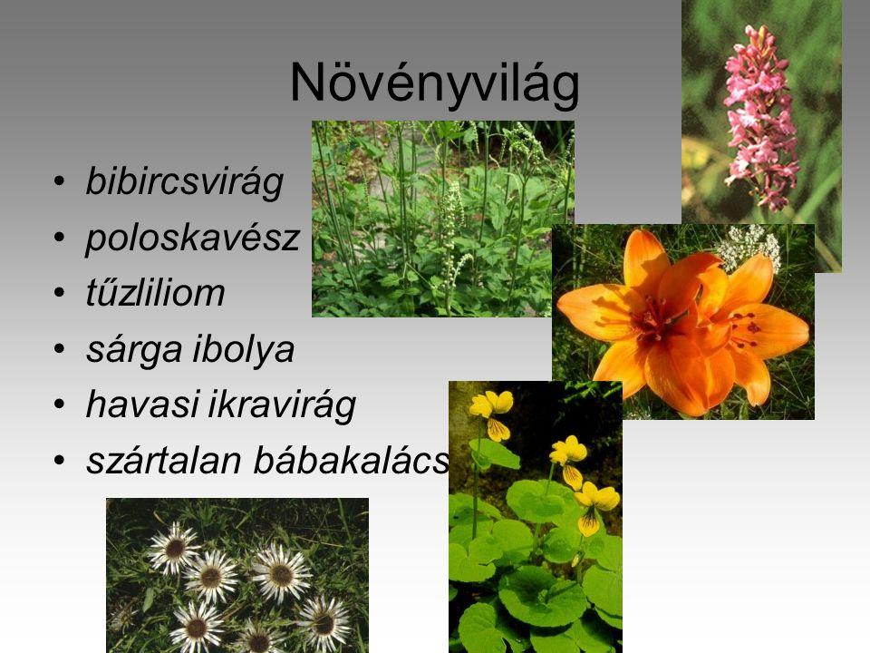 Növényvilág bibircsvirág poloskavész tűzliliom sárga ibolya