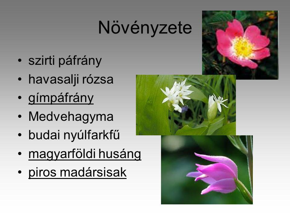 Növényzete szirti páfrány havasalji rózsa gímpáfrány Medvehagyma