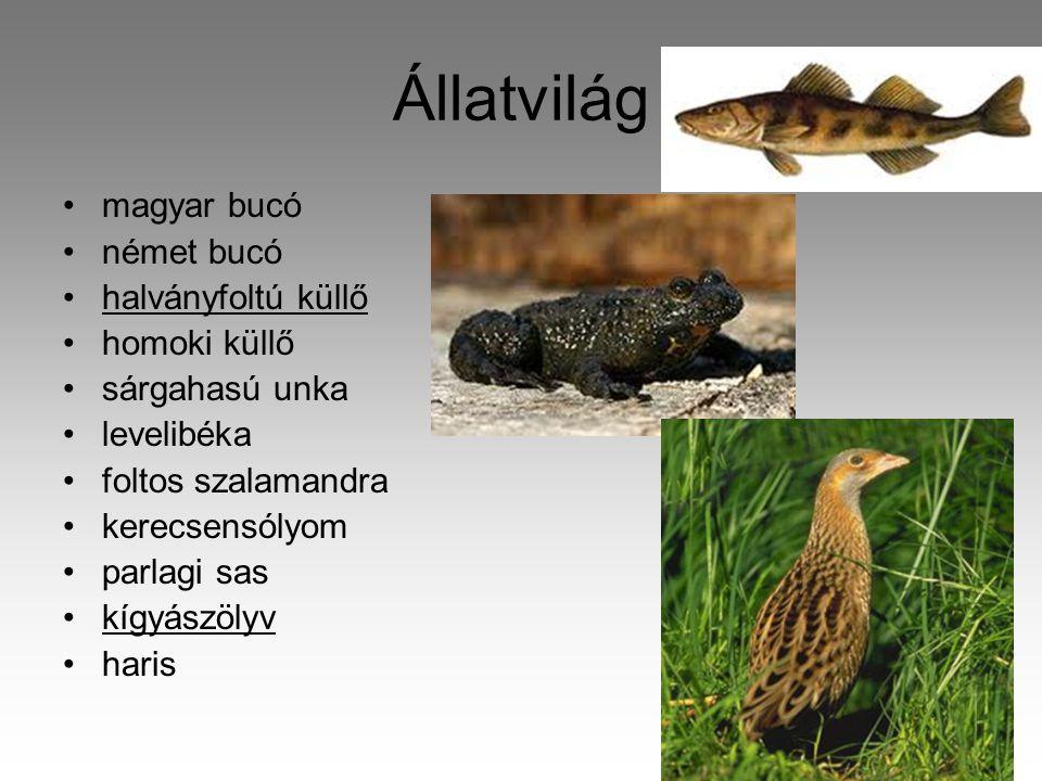 Állatvilág magyar bucó német bucó halványfoltú küllő homoki küllő