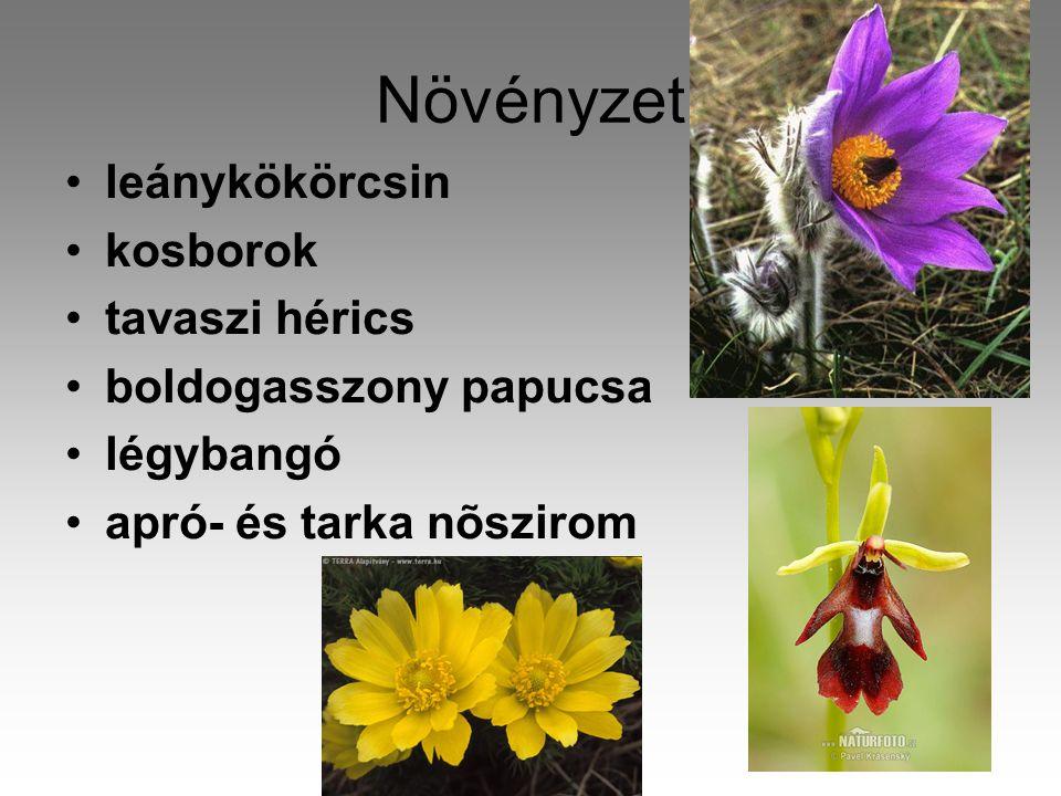 Növényzet leánykökörcsin kosborok tavaszi hérics boldogasszony papucsa