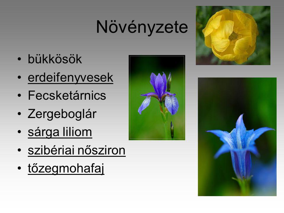 Növényzete bükkösök erdeifenyvesek Fecsketárnics Zergeboglár