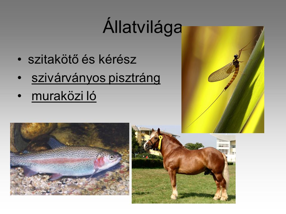 Állatvilága szitakötő és kérész szivárványos pisztráng muraközi ló