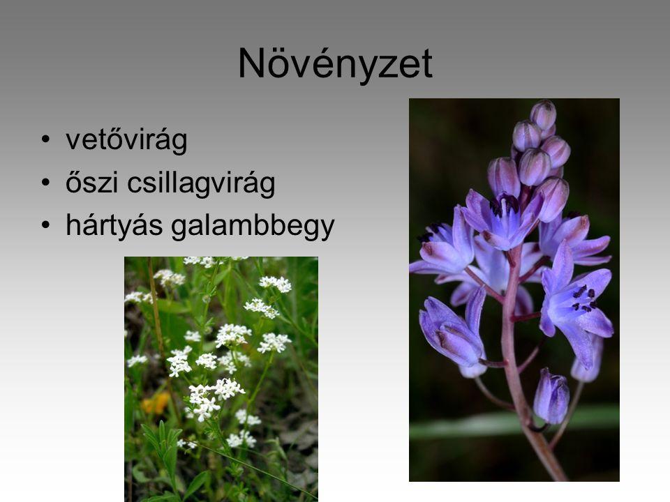 Növényzet vetővirág őszi csillagvirág hártyás galambbegy
