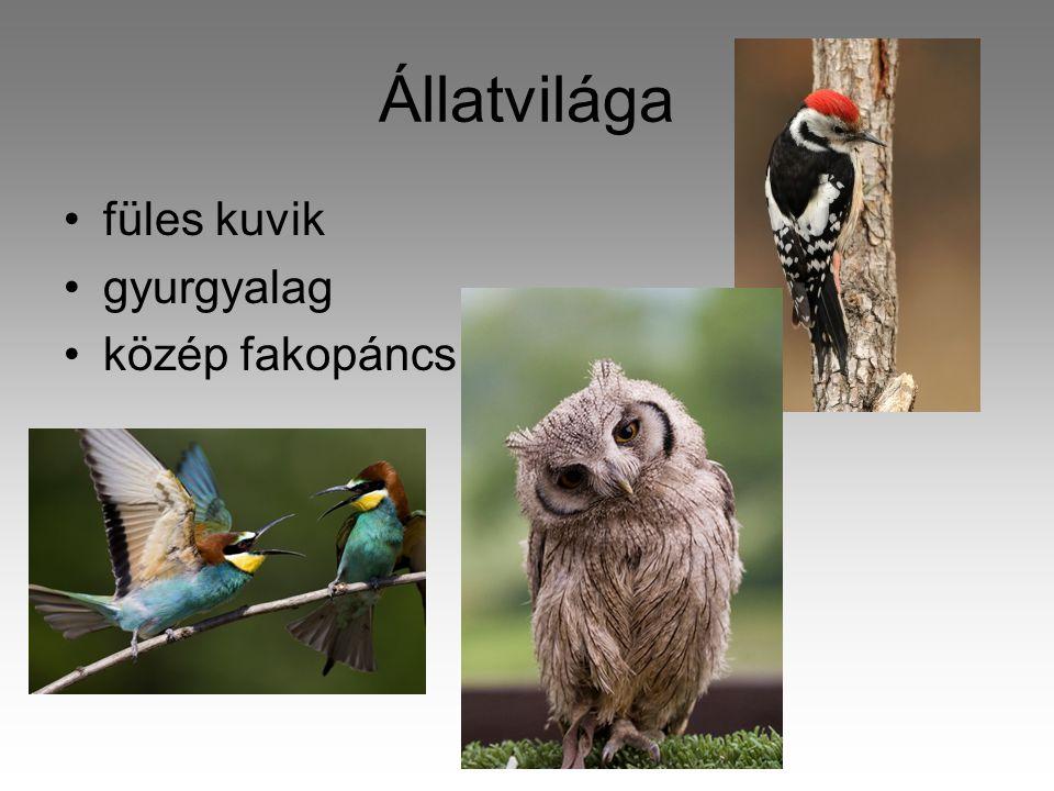 Állatvilága füles kuvik gyurgyalag közép fakopáncs