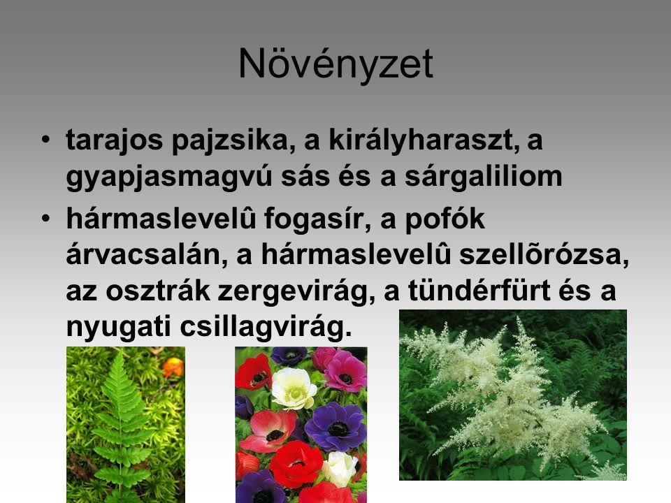 Növényzet tarajos pajzsika, a királyharaszt, a gyapjasmagvú sás és a sárgaliliom.