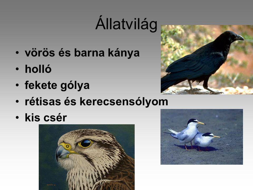 Állatvilág vörös és barna kánya holló fekete gólya