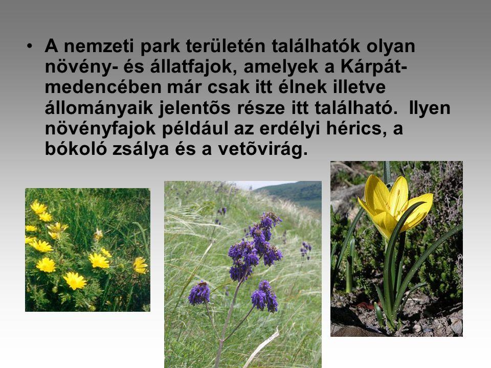 A nemzeti park területén találhatók olyan növény- és állatfajok, amelyek a Kárpát-medencében már csak itt élnek illetve állományaik jelentõs része itt található.