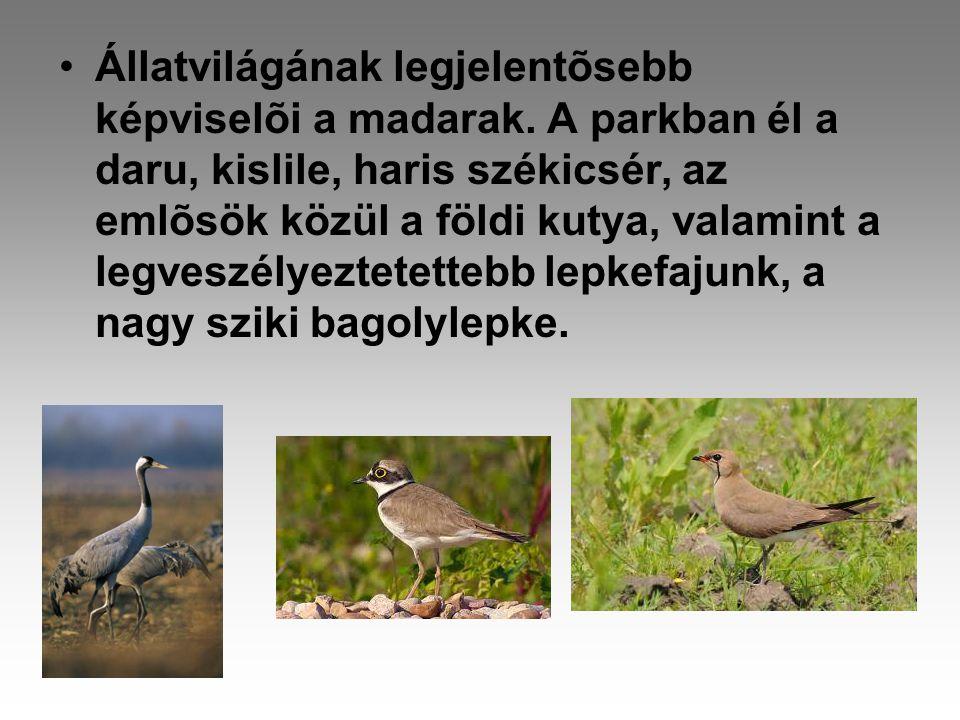 Állatvilágának legjelentõsebb képviselõi a madarak