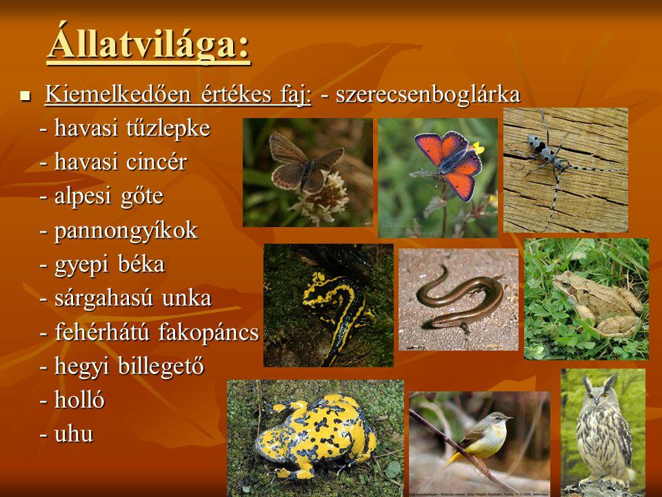 Állatvilága: Kiemelkedően értékes faj: - szerecsenboglárka