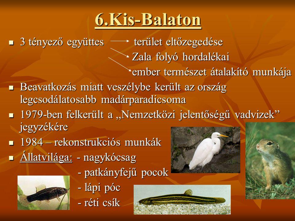 6.Kis-Balaton 3 tényező együttes terület eltőzegedése