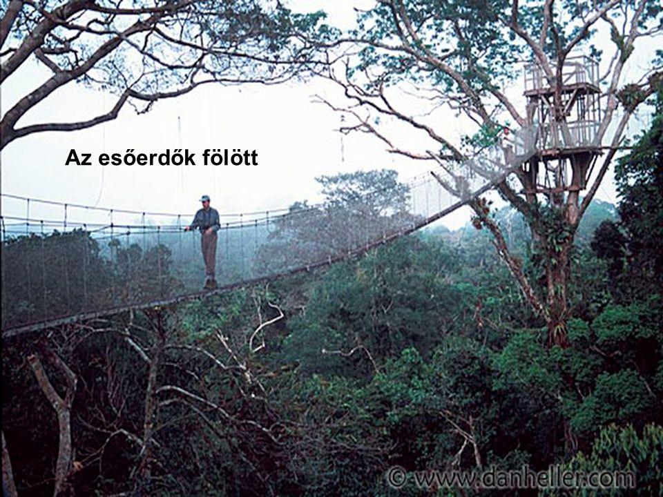 Az esőerdők fölött