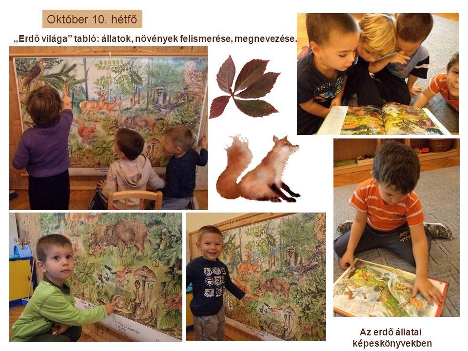 """Október 10. hétfő """"Erdő világa tabló: állatok, növények felismerése, megnevezése. Az erdő állatai."""