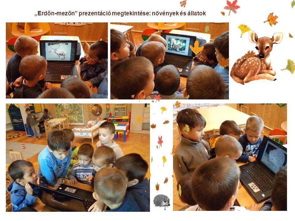 """""""Erdőn-mezőn prezentáció megtekintése: növények és állatok"""