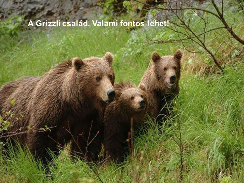 A Grizzli család. Valami fontos lehet!