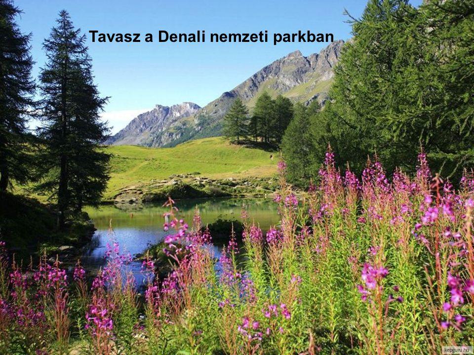 Tavasz a Denali nemzeti parkban