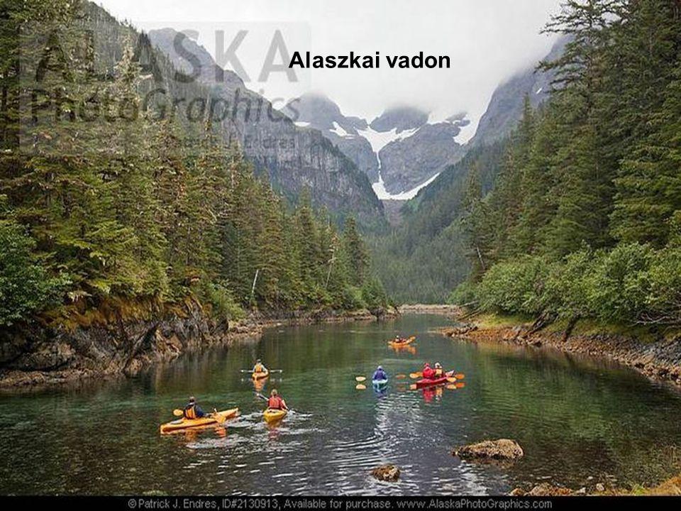 Alaszkai vadon