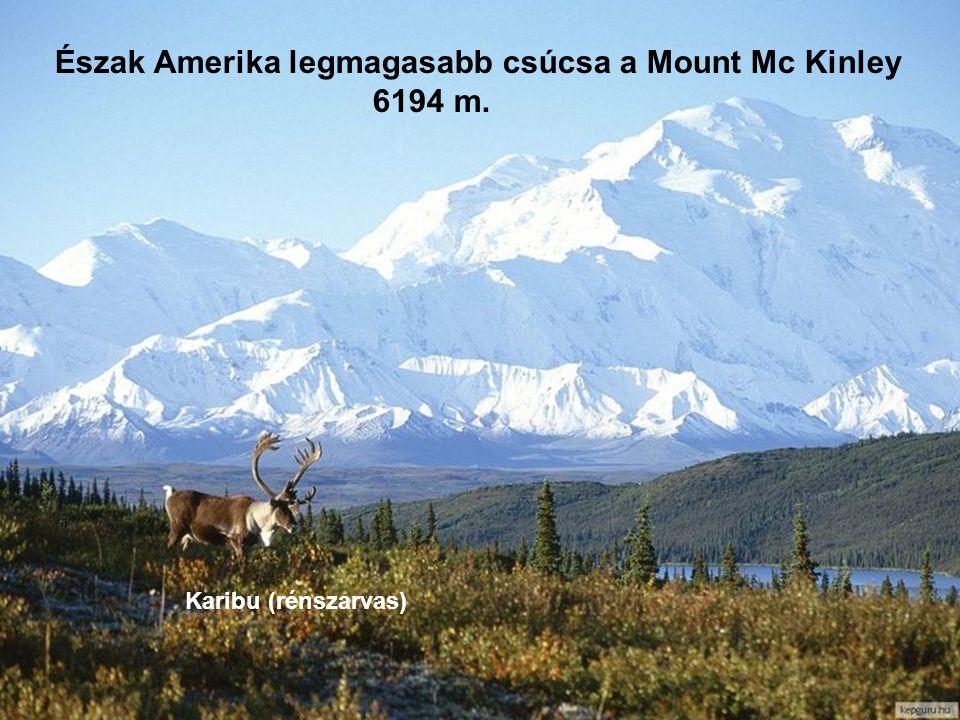 Észak Amerika legmagasabb csúcsa a Mount Mc Kinley 6194 m.