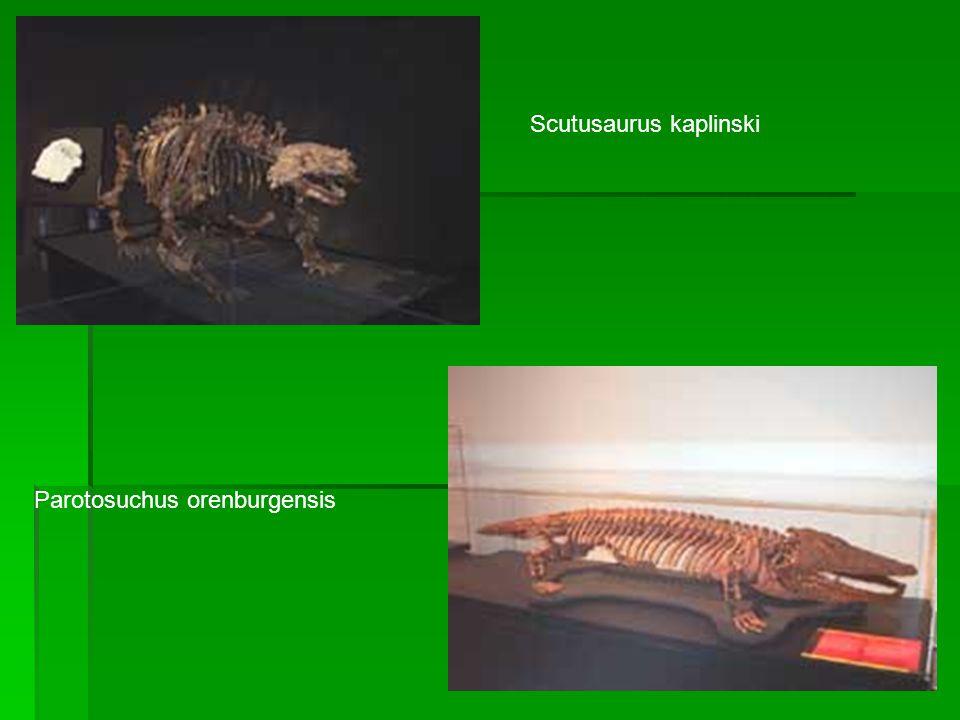 Scutusaurus kaplinski