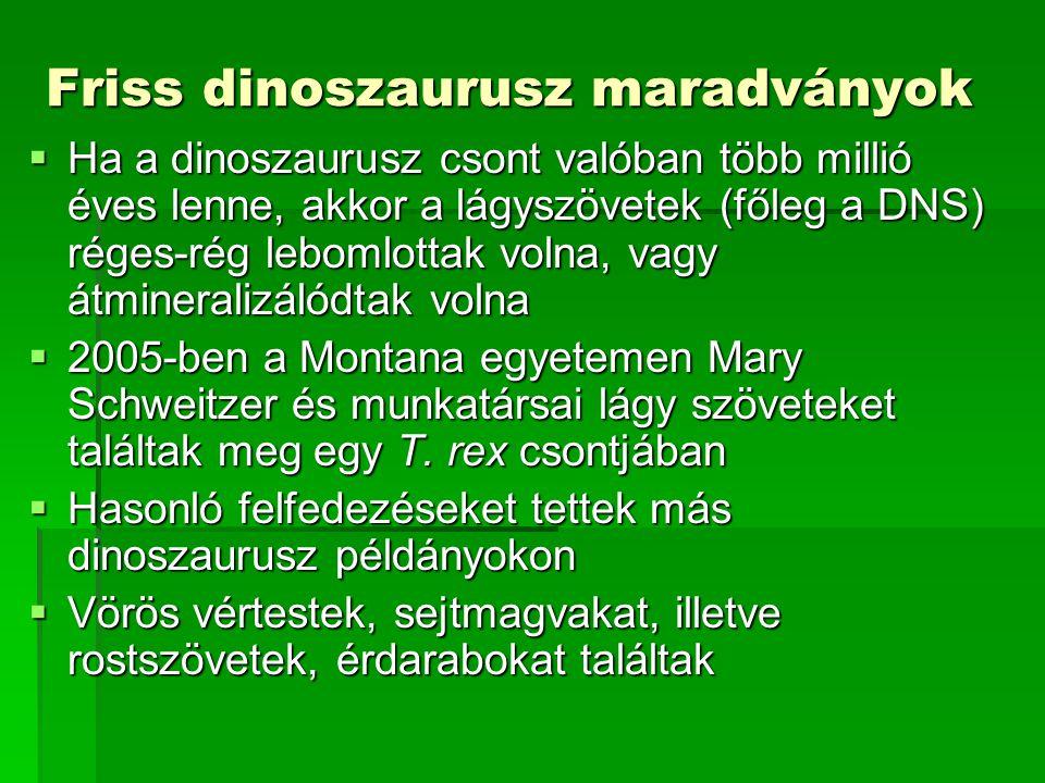 Friss dinoszaurusz maradványok