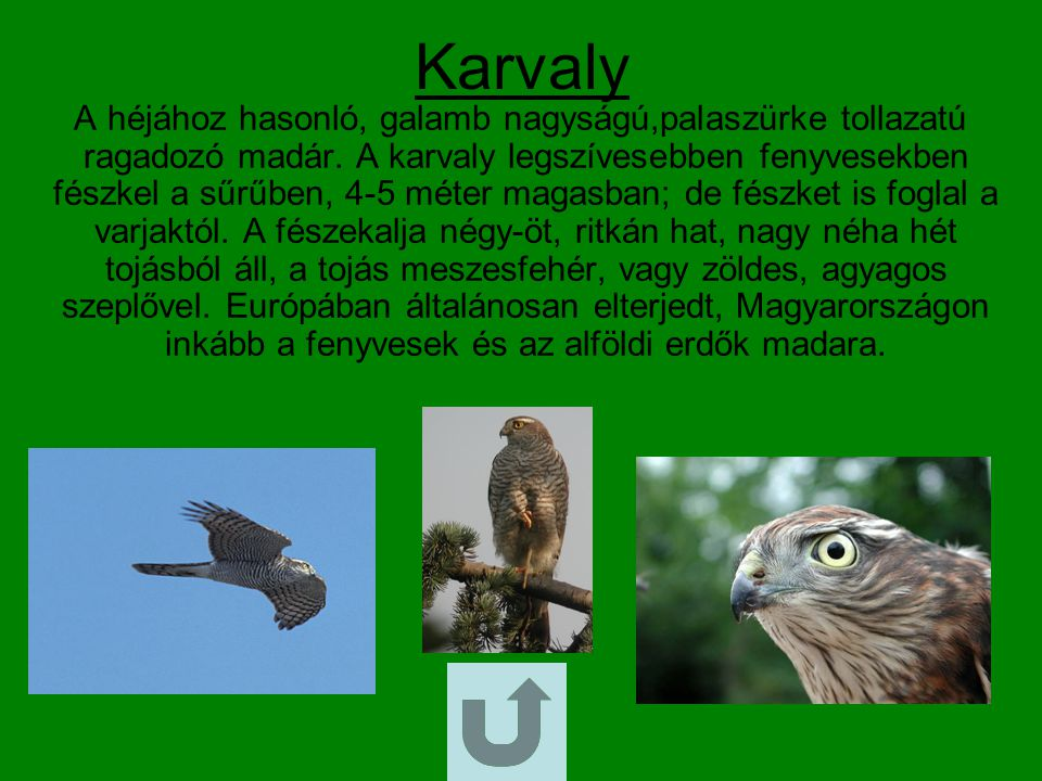 Karvaly