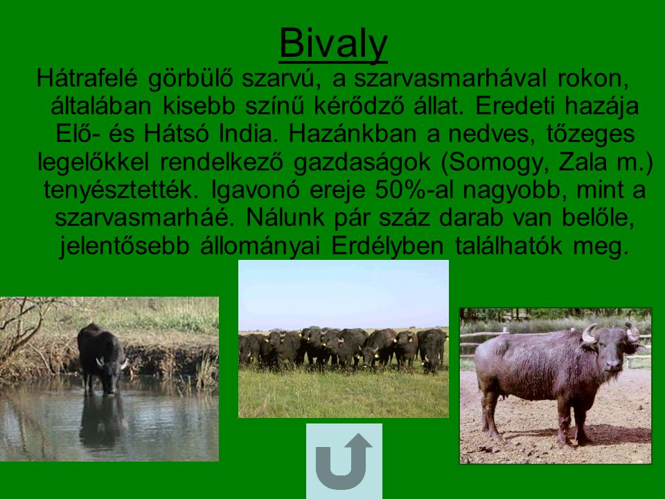 Bivaly