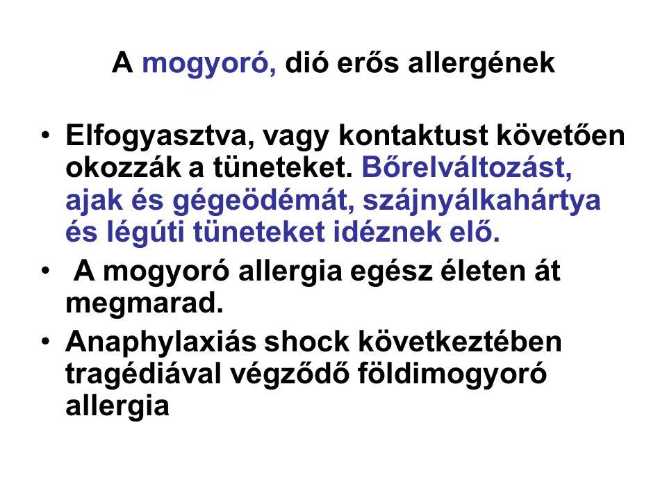 A mogyoró, dió erős allergének