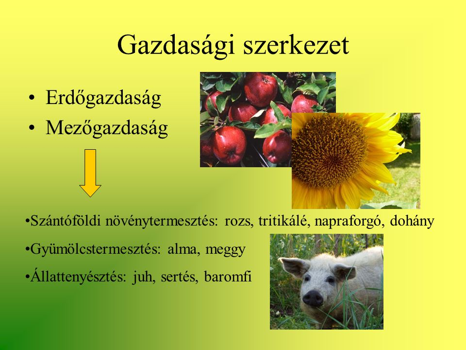 Gazdasági szerkezet Erdőgazdaság Mezőgazdaság