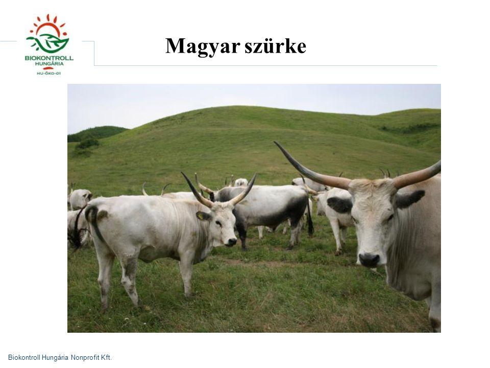 Magyar szürke