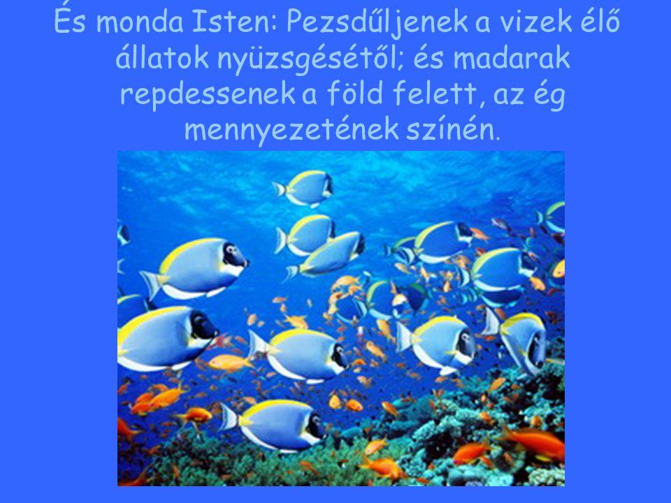És monda Isten: Pezsdűljenek a vizek élő állatok nyüzsgésétől; és madarak repdessenek a föld felett, az ég mennyezetének színén.