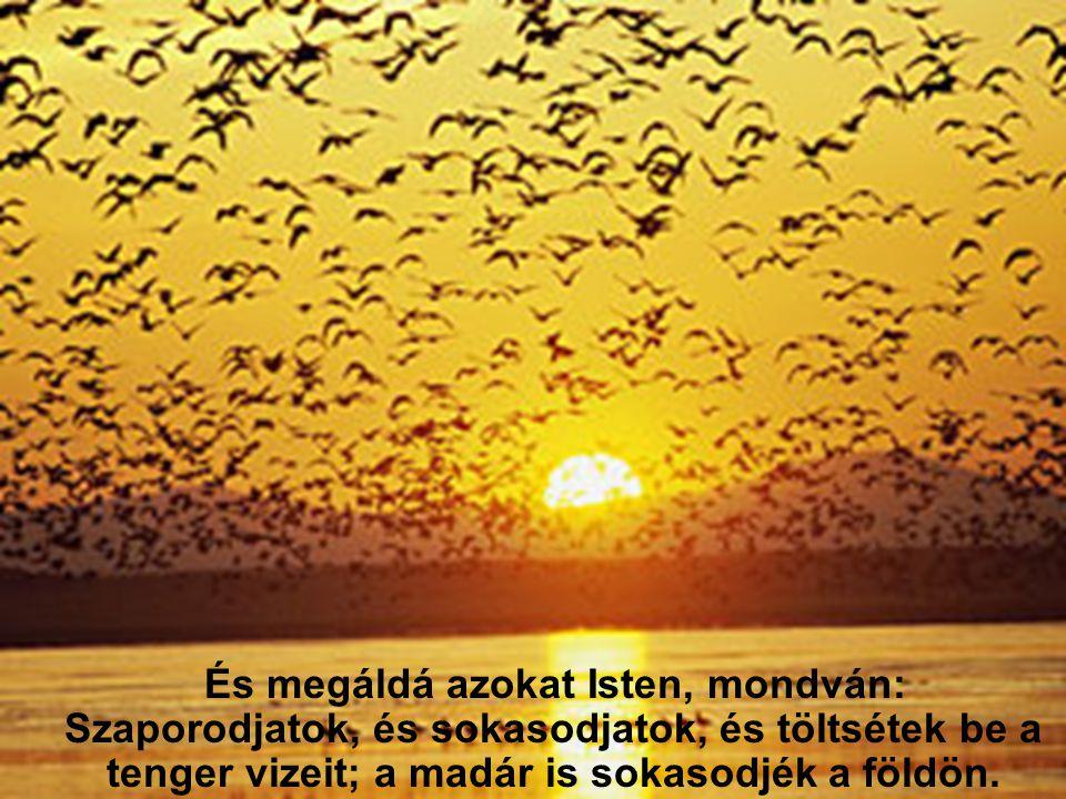 És megáldá azokat Isten, mondván: Szaporodjatok, és sokasodjatok, és töltsétek be a tenger vizeit; a madár is sokasodjék a földön.