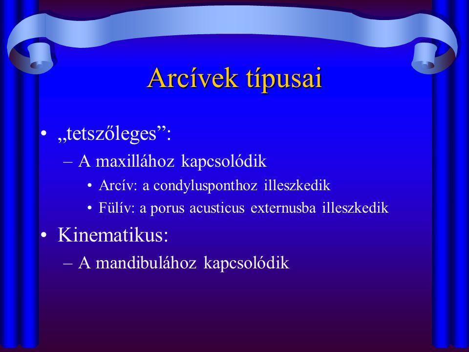"""Arcívek típusai """"tetszőleges : Kinematikus: A maxillához kapcsolódik"""