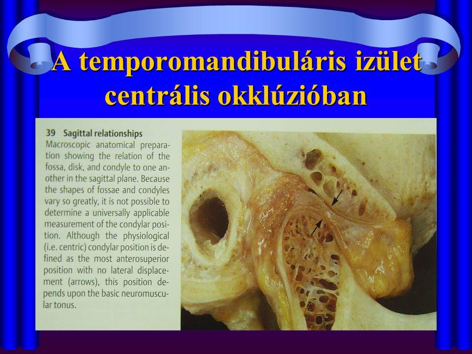 A temporomandibuláris izület centrális okklúzióban