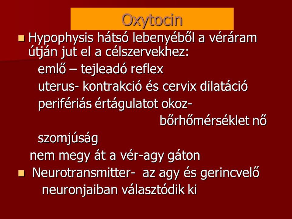 Oxytocin Hypophysis hátsó lebenyéből a véráram útján jut el a célszervekhez: emlő – tejleadó reflex.