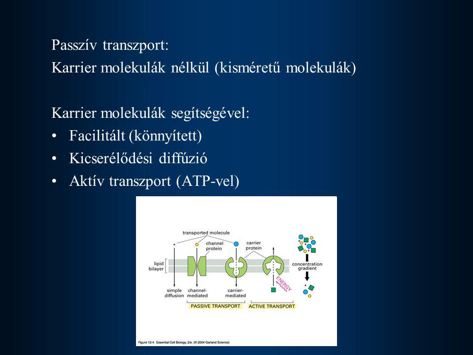 Passzív transzport: Karrier molekulák nélkül (kisméretű molekulák) Karrier molekulák segítségével: