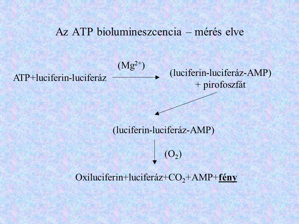 Az ATP biolumineszcencia – mérés elve