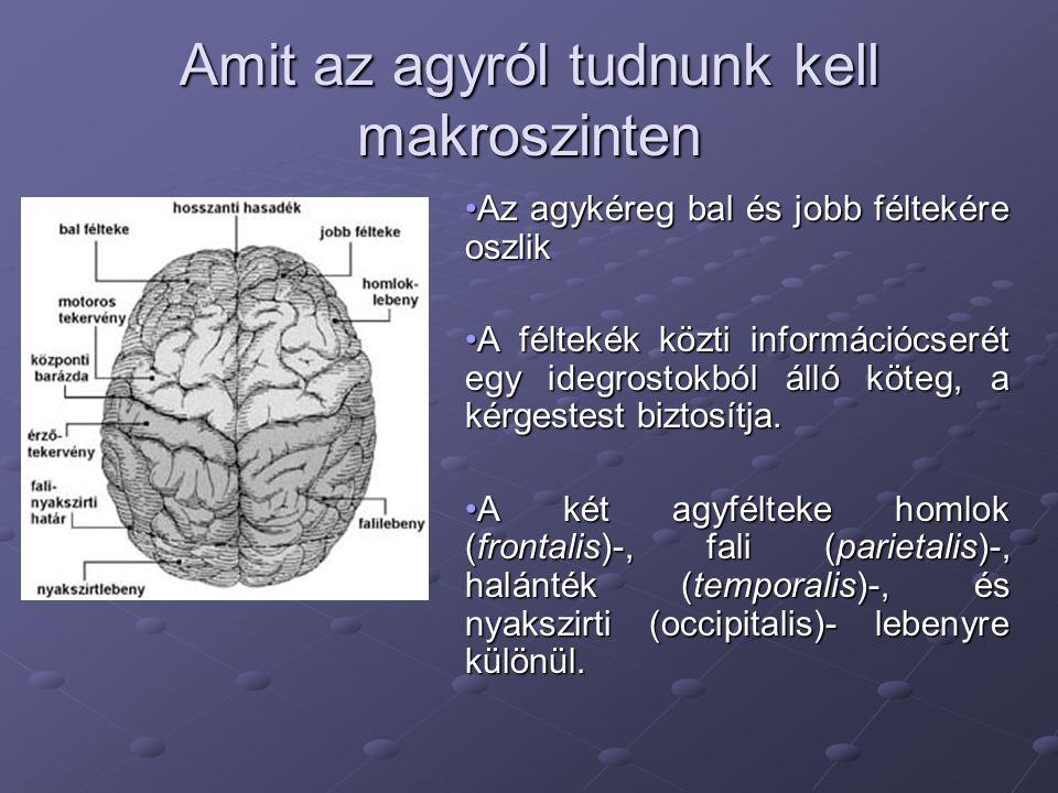 Amit az agyról tudnunk kell makroszinten