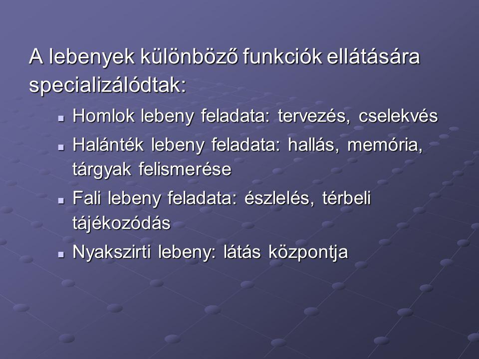 A lebenyek különböző funkciók ellátására specializálódtak: