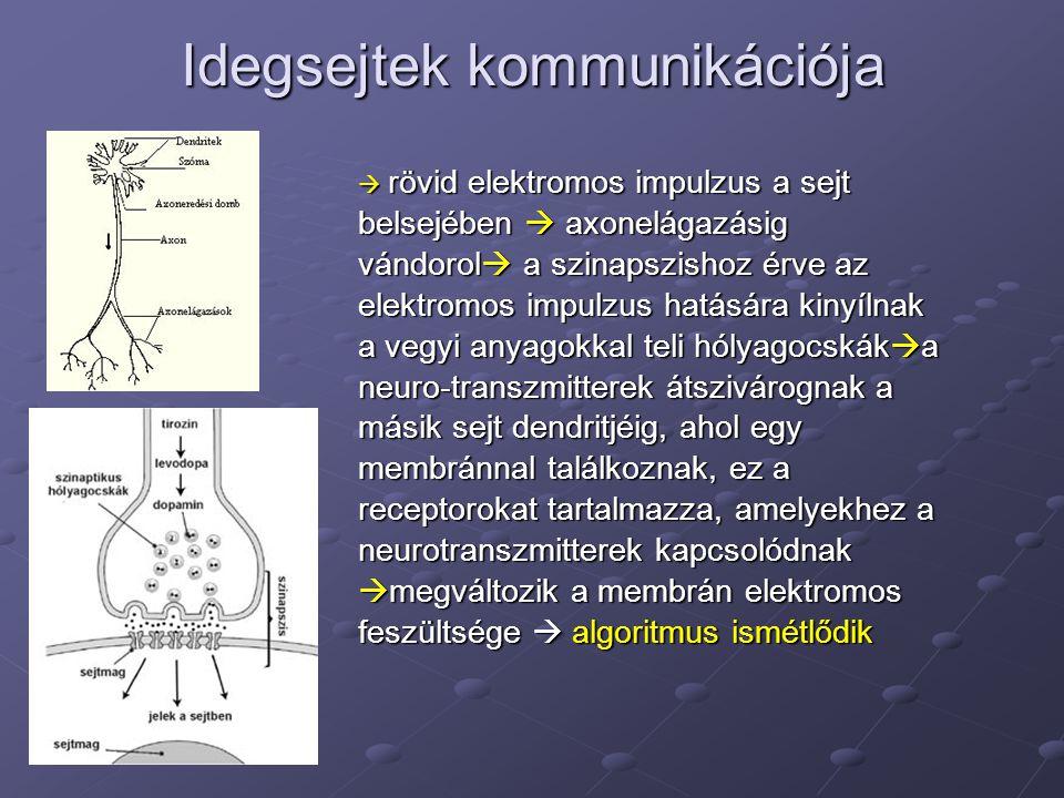 Idegsejtek kommunikációja