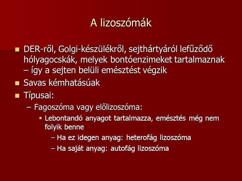 A lizoszómák