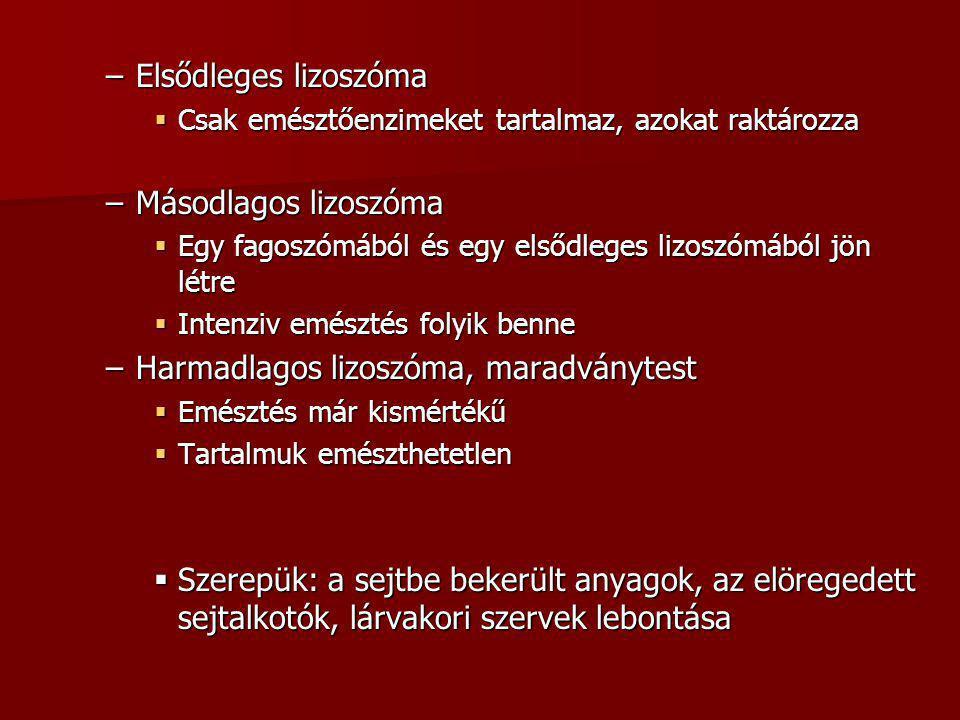 Harmadlagos lizoszóma, maradványtest
