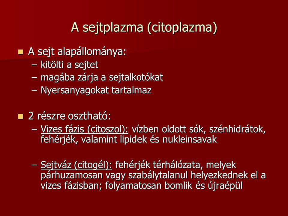 A sejtplazma (citoplazma)