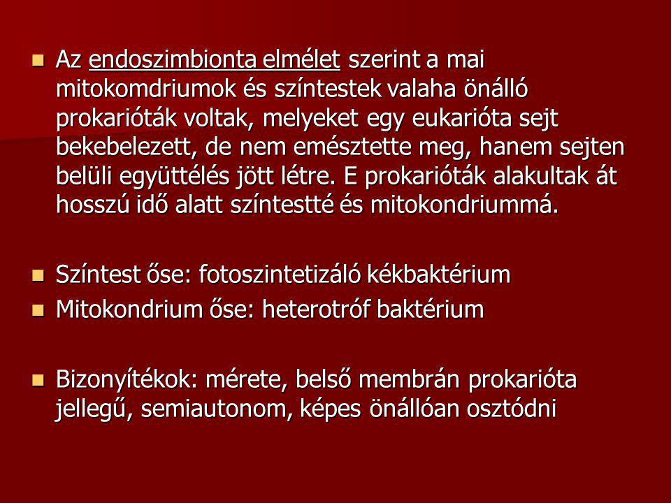 Az endoszimbionta elmélet szerint a mai mitokomdriumok és színtestek valaha önálló prokarióták voltak, melyeket egy eukarióta sejt bekebelezett, de nem emésztette meg, hanem sejten belüli együttélés jött létre. E prokarióták alakultak át hosszú idő alatt színtestté és mitokondriummá.
